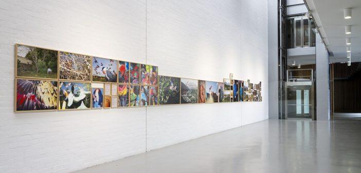 Exposición Paloma al aire - Ricardo cases